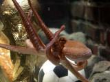 章鱼哥与大力神杯