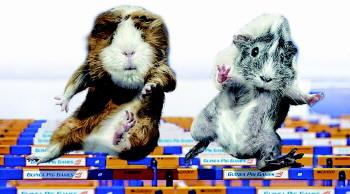 萌系当道!英国发行豚鼠游戏夺金牌日历(图)