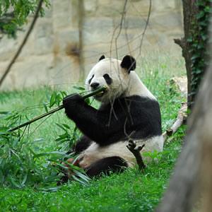 动物界的十大坏妈妈
