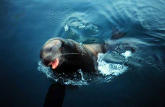 十大最危险海洋动物(组图)图片