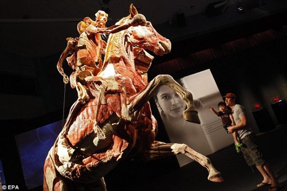 """""""哈根斯之前还对其他动物做过塑化处理,包括这个名为""""骑手与奔马""""的作品,上个月在新加坡展出。"""