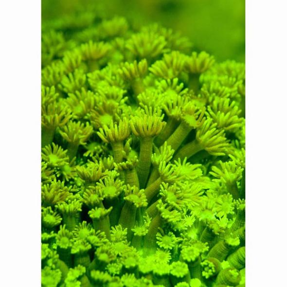 led森系动物背景图片