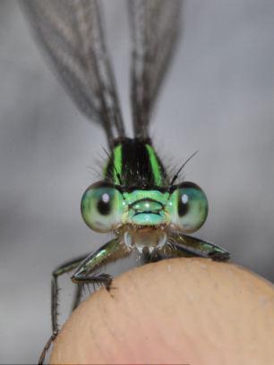英国色彩最艳丽的小虫子的怪异面部