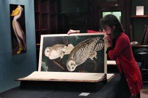 19世纪大型画册《美国鸟》7日在伦敦苏富比拍卖行以730万英镑天价拍出