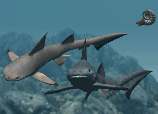 弓鲨的可能模样。
