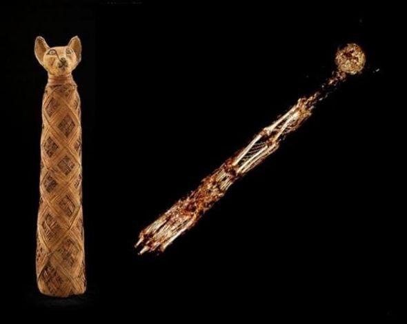 左侧:一具用小猫制成的木乃伊,以及它在CT扫描下看到的内部结构(右侧)