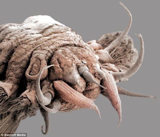 水白芨的外观形状-现奇特海鳞虫 外形恐怖似怪物 图图片