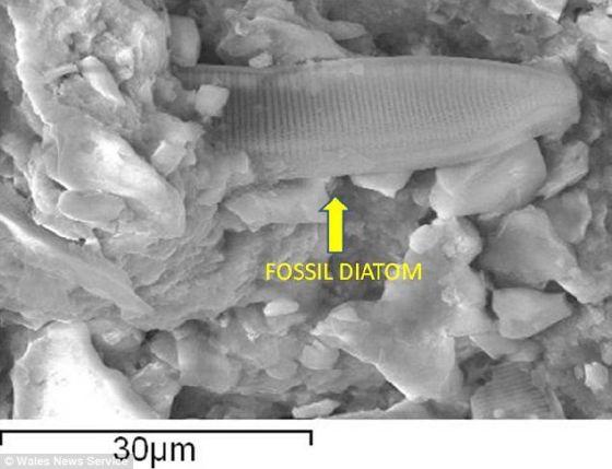 确凿证据?这张扫描电子显微图旨在展示不言而喻的微小化石迹象