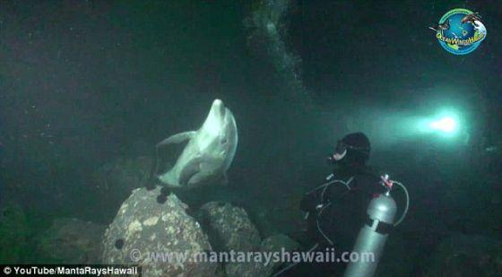 这位潜水员说这条海豚靠近他,无疑需要帮助