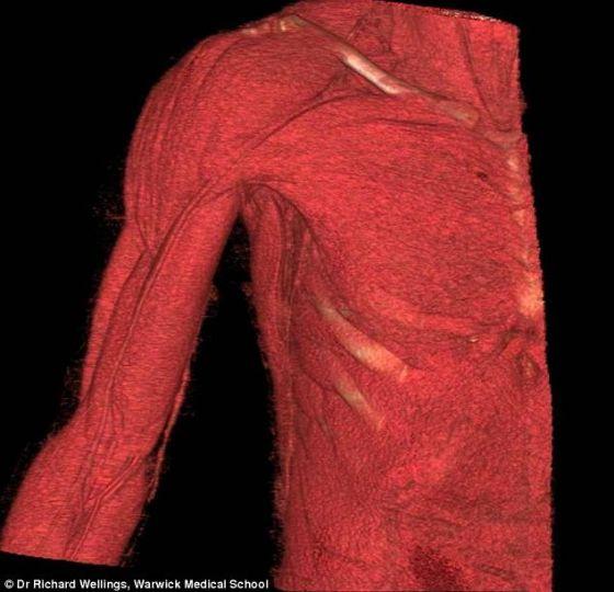 展示胸部、肩部和手臂解剖学结构的3D动画的截图,将与达芬奇的素描一同展出