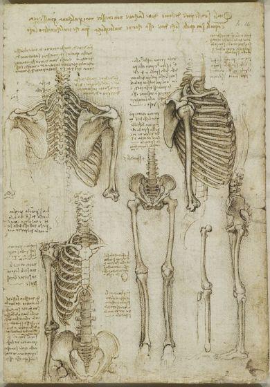英展出达芬奇人体解剖素描:准确性惊人(图)
