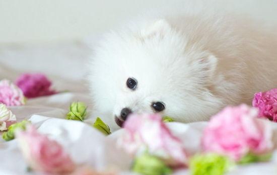 可爱小宠物唯美壁纸