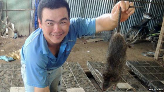 越南商人在柬埔寨边境购买田鼠。