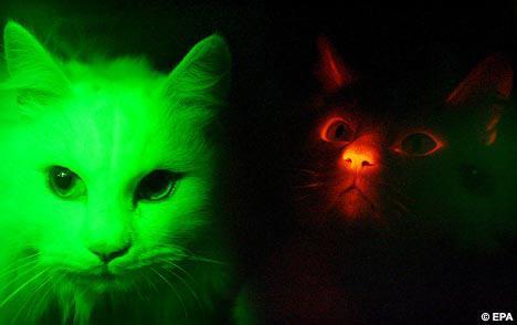 韩国克隆出夜光猫遇紫外线会发光