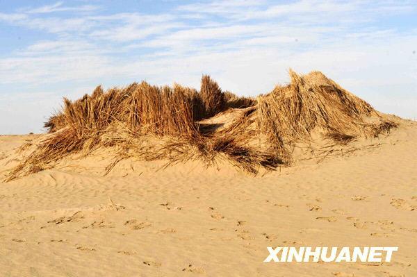 若羌县人口有多少_中国最大的 鸡屁股 快递都不包邮(3)