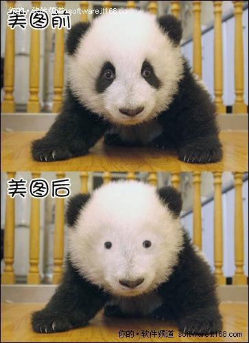熊猫宝宝使用黑眼圈的对比图