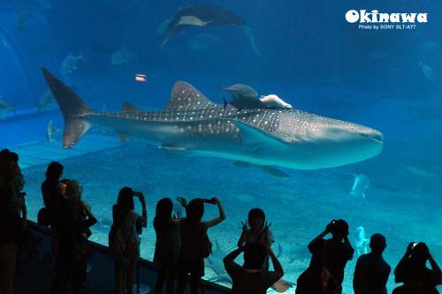壁纸 动物 海底 海底世界 海洋馆 水族馆 鱼 鱼类 桌面 500_333