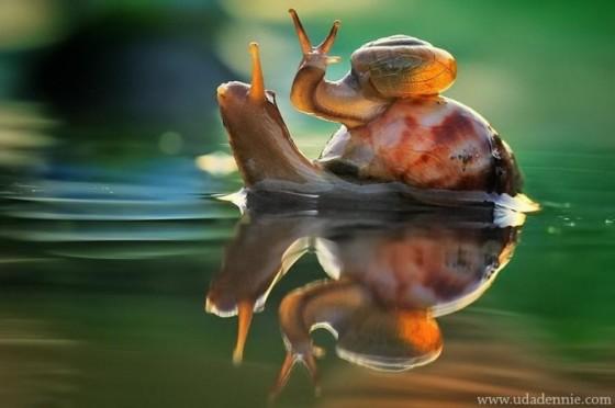 揭露小动物摆拍真相——黑暗生态摄影