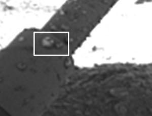 科技时代_研究称早期火星环境湿冷适宜孕育生命(图)