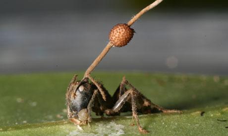 科技时代_美科学家发现地球最古老僵尸蚂蚁证据(图)