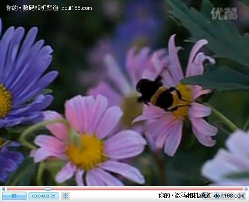 看蜂飞蝶舞卡西欧FH100网友试用(二)