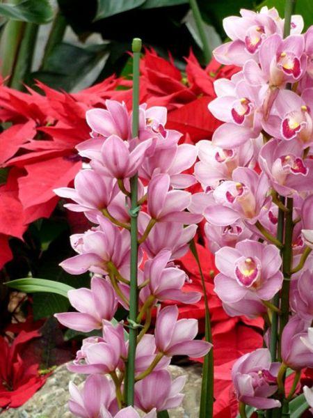 我们可以徜徉在辰山植物园的自然怀抱中,欣赏着樱花,蔷薇,牡丹,紫藤花