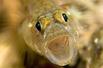 英国海岸十大奇特海洋生物