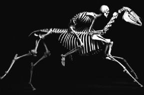 脊椎动物骨骼照演绎视觉版进化论