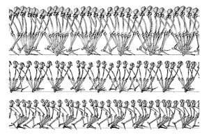 科学家发现脚踝在人类演化过程中发挥关键作用