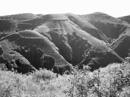 专家称黄土高原植被覆盖率显著增加(图)