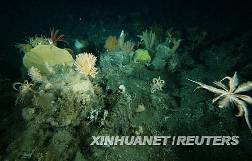 南极深海发现似郁金香等不明生物(图)