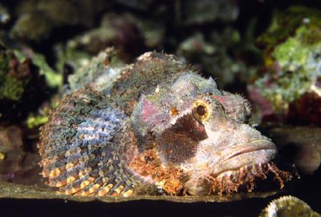 六种最致命动物:棺材水母与石鱼