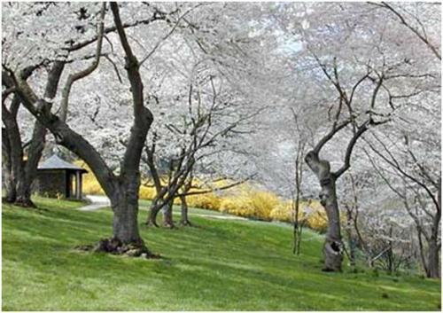 盘点世界十大最美园林:苏州网师园上榜(图)(2)