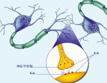 婴幼儿脑部发育新配方ga引进中国(组图)