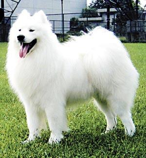 可爱胖狗图片