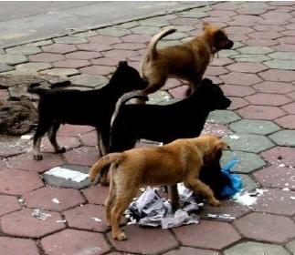 微博同城救助流浪小动物