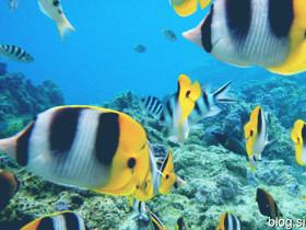 五彩缤纷的热带鱼儿
