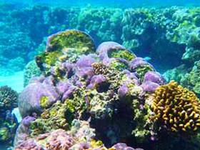 触手可及的珊瑚公园