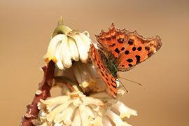 河南:蜂蝶出动