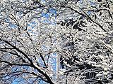 海淀:在雪后的美景中沉醉