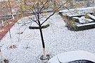 山东:小区草坪被雪覆盖