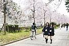 日本女生最爱去哪赏樱