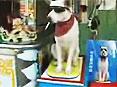 天才狗狗接电话卖槟榔