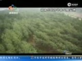 航拍:长江沉船上游三公里有大片树林倒伏