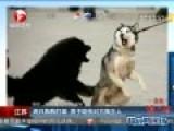 男子因自家狗打架败下阵咬伤对方狗主人