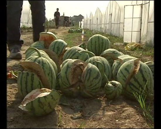 有关新年的西瓜雕刻图片