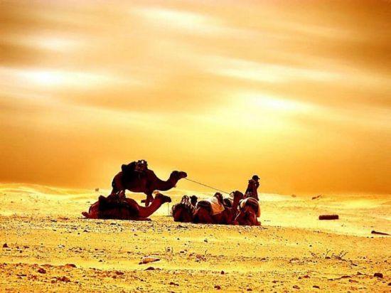 突尼斯撒哈拉沙漠