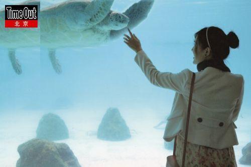 憨态可掬的海龟。
