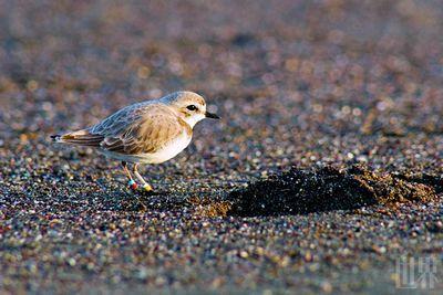 海湾中的海鸟