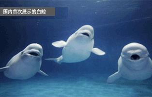 海洋动物馆(韩国丽水世博会官网)